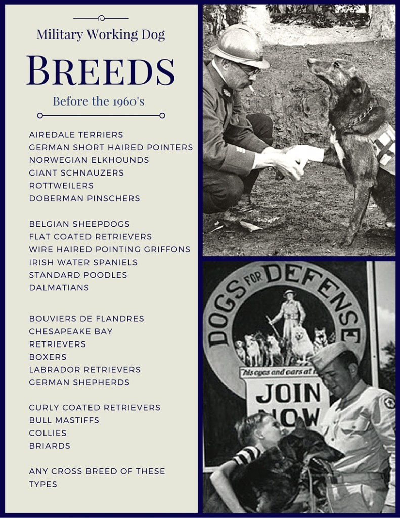 k9 veterans day - Breeds of military dogs before 1960