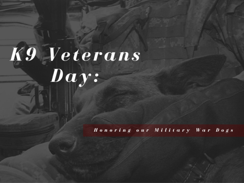 K9 Veterans Day – Honoring Military Working Dogs
